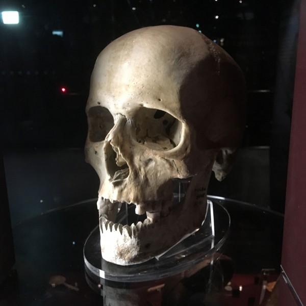 Mary Rose - skull